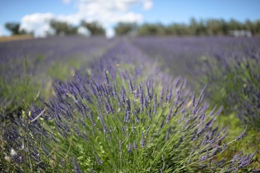 La Tuscia…la Piccola Provenza Tra Castelli, Fioriture E Giardini Incantati